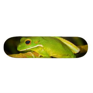 White Lipped Tree Frog Litoria Infrafrenata Skateboard