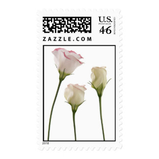 white lisianthus flowers, trio postage stamp