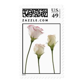 white lisianthus flowers, trio stamps