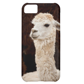 White Llama Picture for iPhone 5 Case