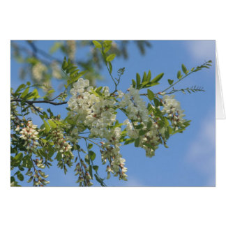 White Locust Blossoms Flower Photography Card