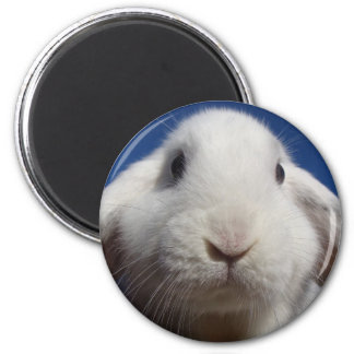 White Lop Rabbit Magnet
