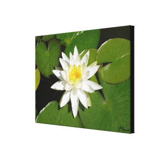 White Lotus Gallery Wrapped Canvas