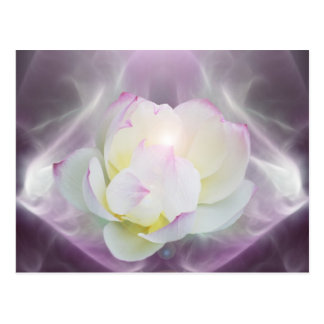 White lotus flower postcard