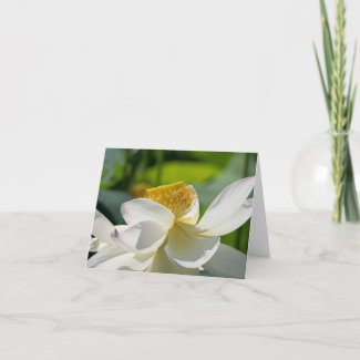 White Lotus - Folded Note Card
