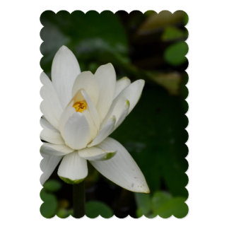 White Lotus 5x7 Paper Invitation Card