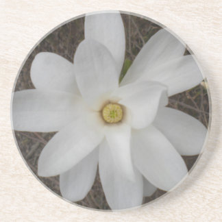White Magnolia Blossom Coasters