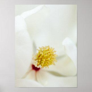 White Magnolia Flower Magnolias Floral Flowers Poster