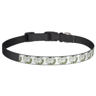 White Magnolia Flower Pet Collar