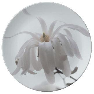 White magnolia flower photo plate