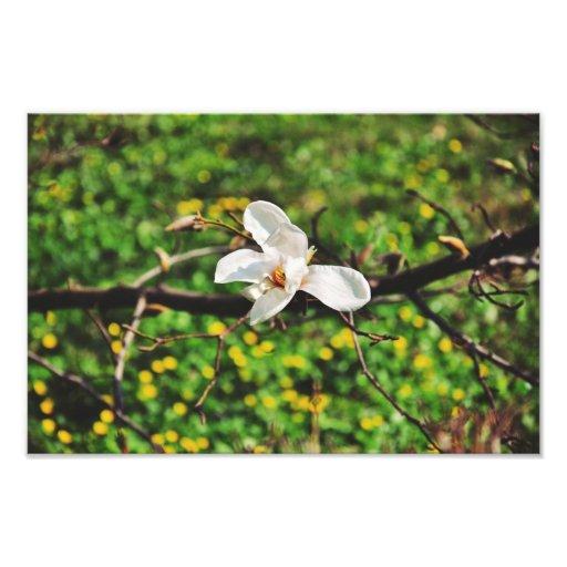 White magnolia flower photo print
