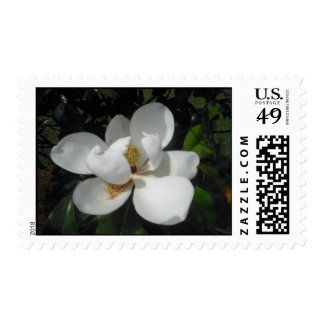 White Magnolia Postage