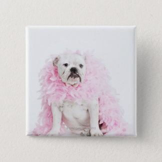 White male dog with pink boa pinback button