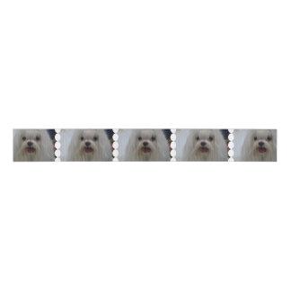 White Maltese Dog Grosgrain Ribbon