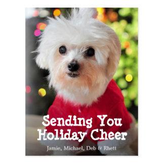 White Maltese dog in red Santa Claus suit. Postcard