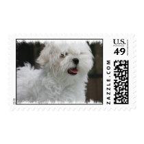 White Maltese Dog Postage Stamp