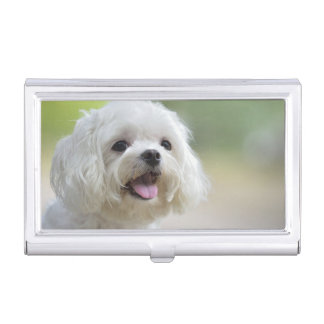 White maltese dog sticking out tongue case for business cards