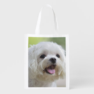 White maltese dog sticking out tongue grocery bag