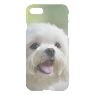 White maltese dog sticking out tongue iPhone 7 case