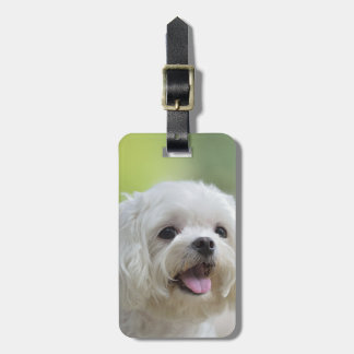 White maltese dog sticking out tongue travel bag tags