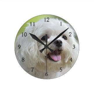 White maltese dog sticking out tongue round wallclocks