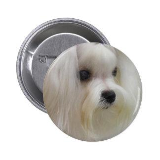 White Maltese Pinback Button