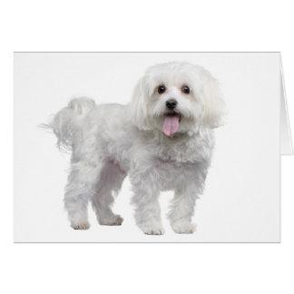 White Maltese Puppy Dog Blank  Notecard / Card