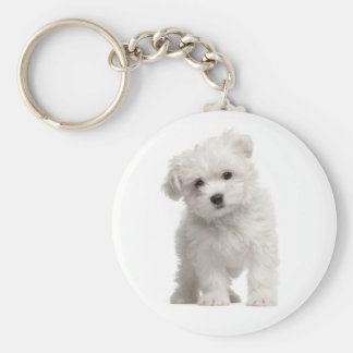 White Maltese Puppy Dog Love Custom Keychain