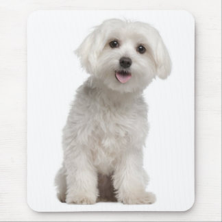 White Maltese Puppy Dog Mouse Pad