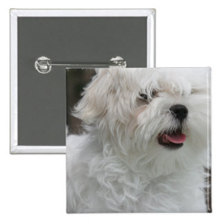 White Maltese Puppy Square Pin