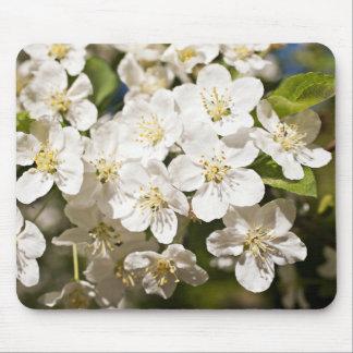 White Malus Toringo Flowers Mouse Pad