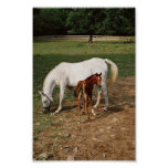 White Mare with Chestnut Foal Print