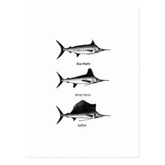 White Marlin - Blue Marlin - Sailfish Logo Postcard