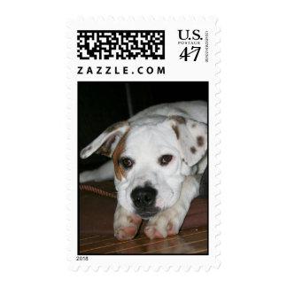 White Mastiff/Bulldog Mixed Breed Postage Stamps