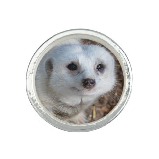 White Meerkat Closeup Ladies Silver Round Ring. Rings