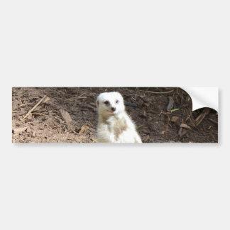 White_Meerkat_Grins, _Bumper_Sticker. Pegatina Para Auto