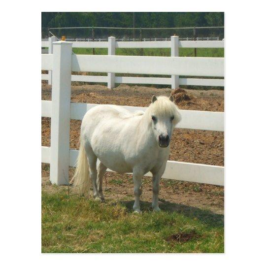 White miniature horse postcard