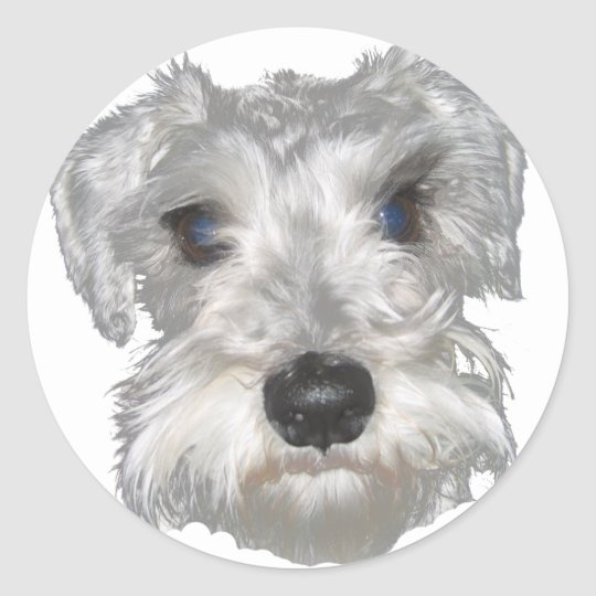 White Miniature Schnauzer Sticker Zazzle Com