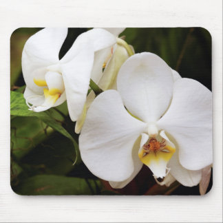 White Moon Orchid (Phalaenopsis Aphrodite) Mouse Pad
