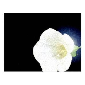 White Morning Glory on Black Background Postcard