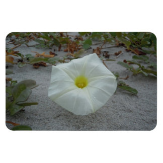 White Morning Glory on the Beach Magnet