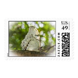 White Morpho Stamps