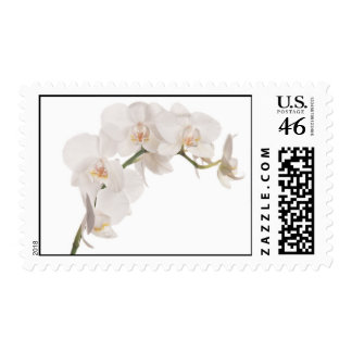 White Moth Orchid Postage Stamps
