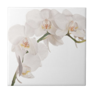 White Moth Orchid Ceramic Tiles