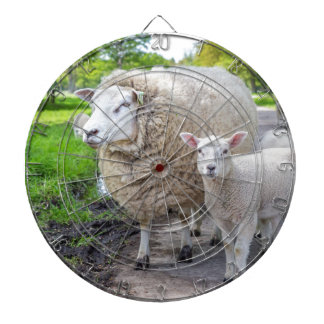 White mother sheep and lamb standing on road dart board