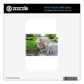 White mother sheep and lamb standing on road iPod touch 4G skins
