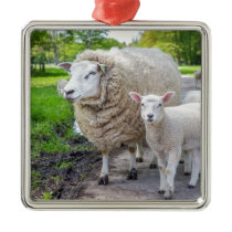 White mother sheep and lamb standing on road metal ornament