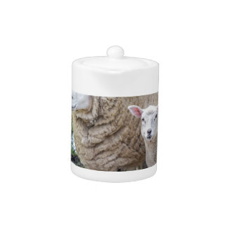 White mother sheep and lamb standing on road teapot