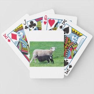 White mother sheep with two drinking black lambs bicycle playing cards