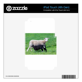 White mother sheep with two drinking black lambs iPod touch 4G decal